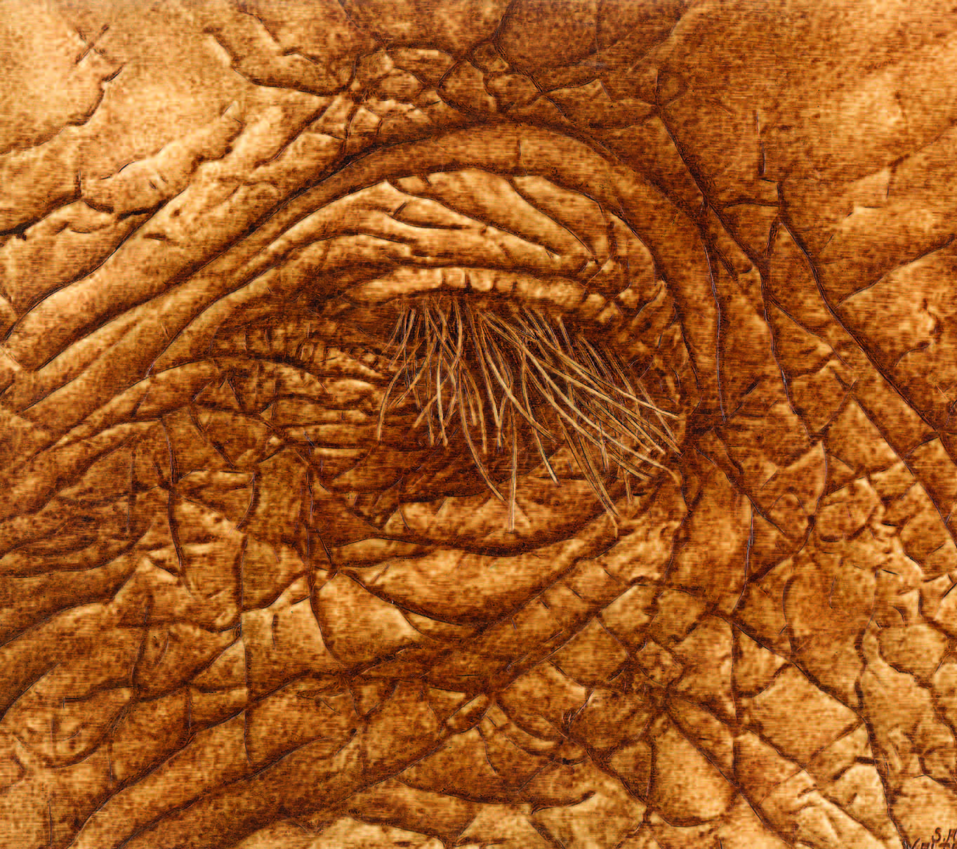 Sue Walters Pyrographic Gallery Pyrography Online