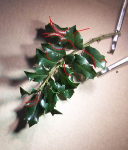 paper-holly-7