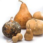 WEB-Gourd-Lead2-s