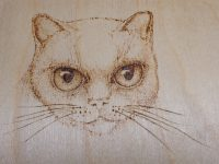 Woodburning Animal Eyes