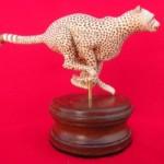 ZU-Moss - cheetah