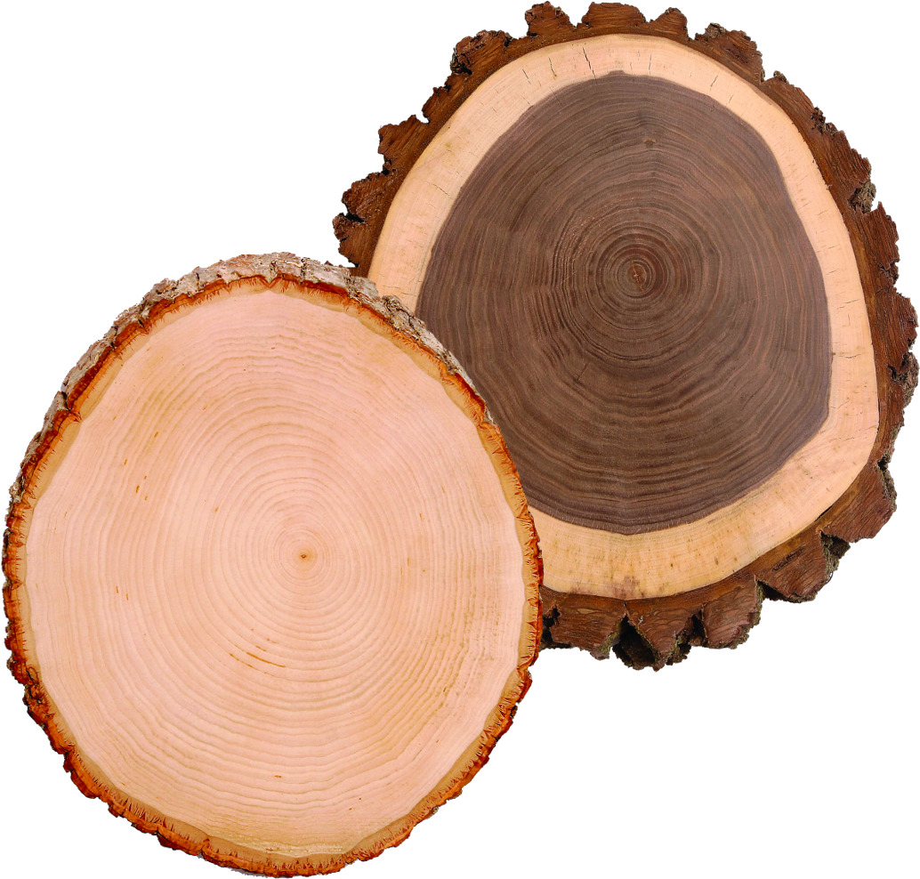 Anatomy Of Wood Woodcarving Illustrated This Diagrams Shows The Annual Rings A Tree Trunk Heartwood Walnut Is Darker Than Sapwood But Basswood Consistent Color