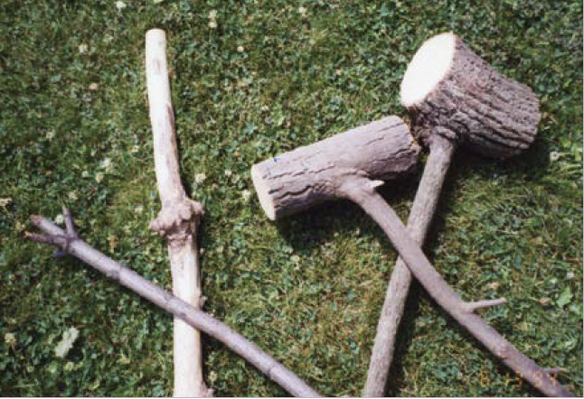 The Right Wood for Walking Sticks - Woodcarving Illustrated