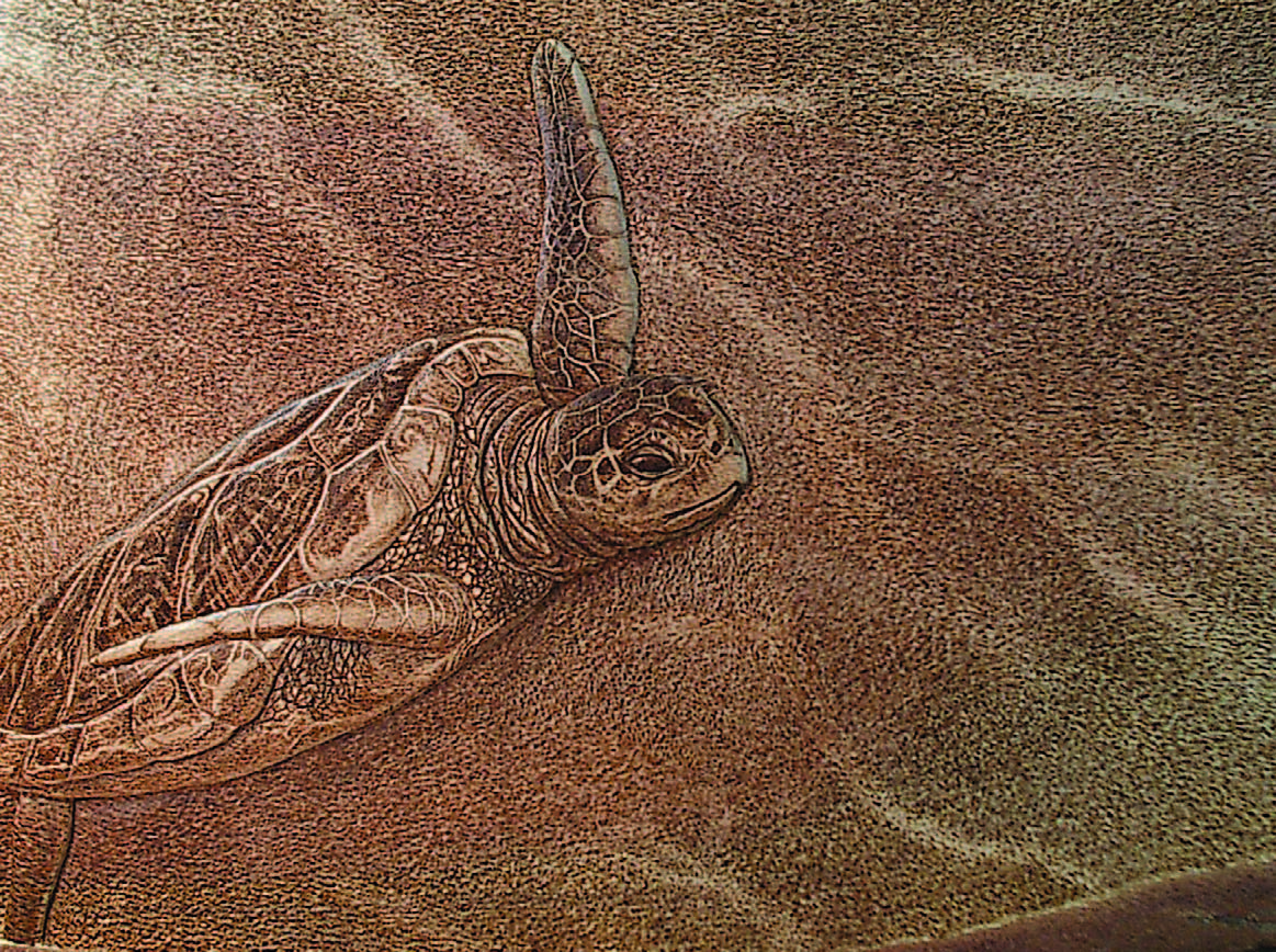 Turtle Rising monochrome pyrography on relief carved silky oak.