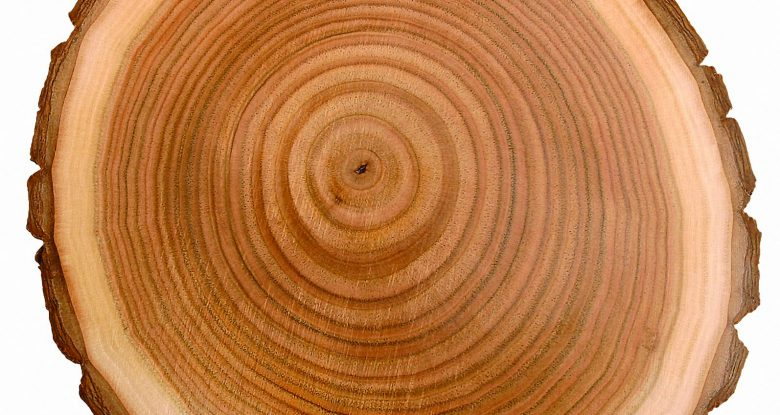 Anatomy of Wood